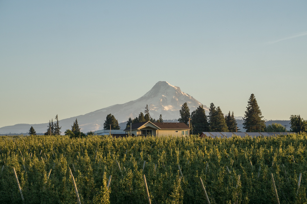 mt-hood-oregon-1