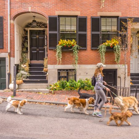 Boston dog walker beacon hill