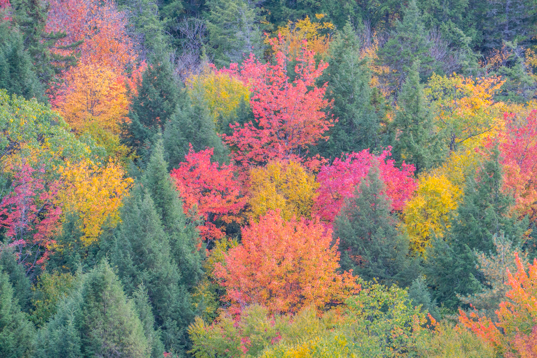 vermont-automne-nouvelle-angleterre-fall-foliage-20