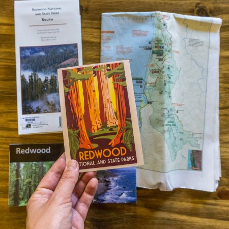 Redwoods california cartes postales