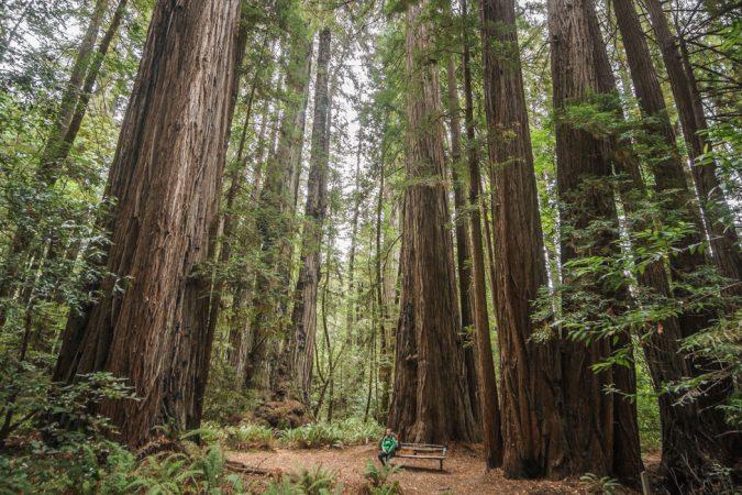 redwood-sequoia-california-23