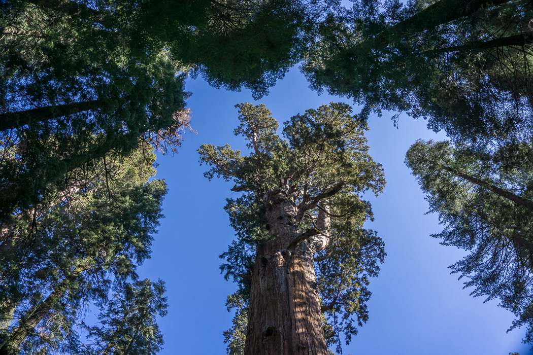 sequoia-californie-1