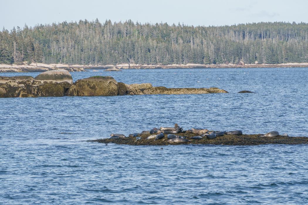 Maine Deer Isle-22