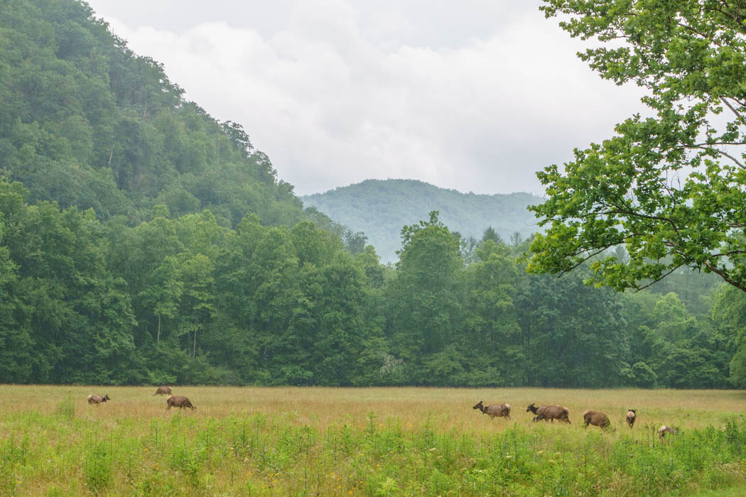 Great Smoky National Park-12